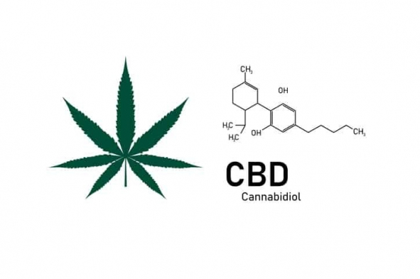 gallery/cannibidiol-in-cbd-oil